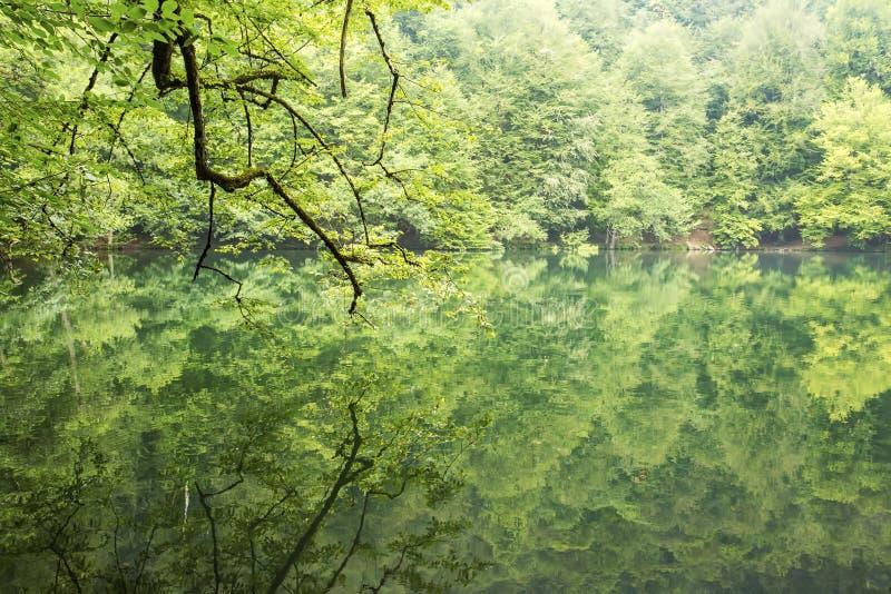 Yedigoller / Bolu / Turkey, summer season, forest landscape stock image
