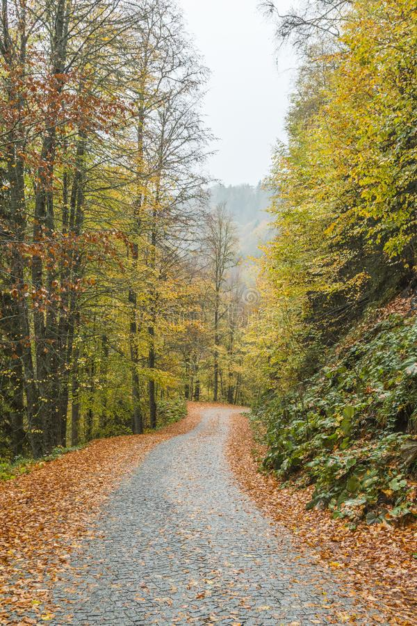 Yedigoller National Park. Beautiful, bolu. stock images