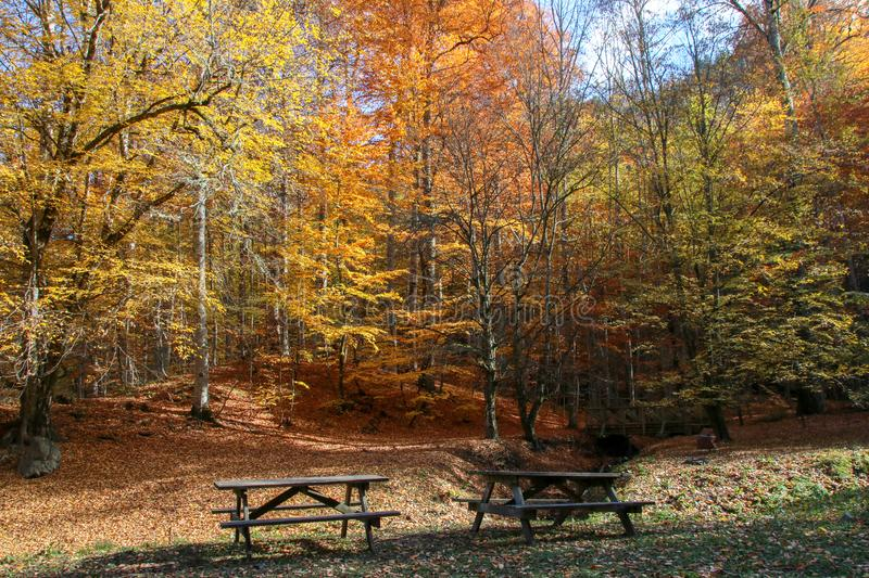 Yedigöller National Park, Autumn. Yedigoller National Park is an oasis for urban folk, who are often shocked by its beauty when witnessing the seven small royalty free stock image