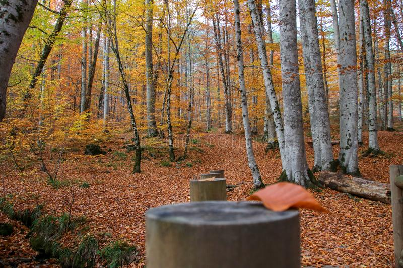 Yedigöller National Park, Autumn. Yedigoller National Park is an oasis for urban folk, who are often shocked by its beauty when witnessing the seven small royalty free stock photos