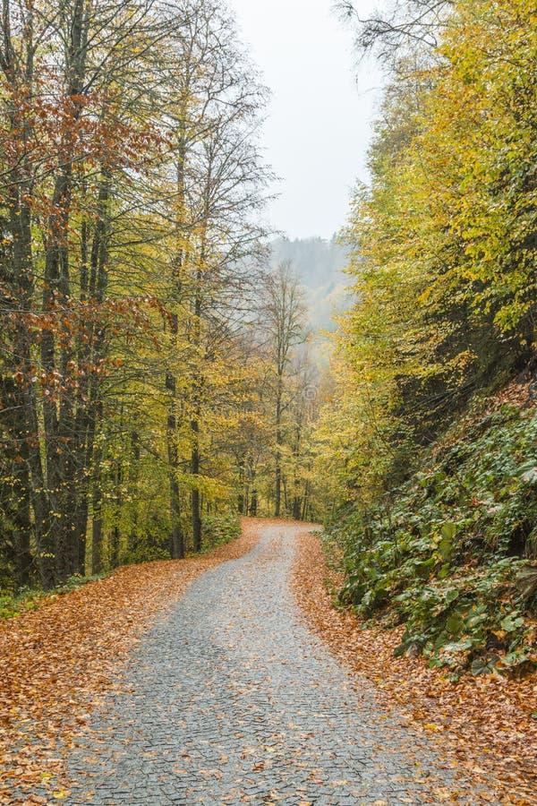 Yedigoller park narodowy Piękny, bolu obrazy stock