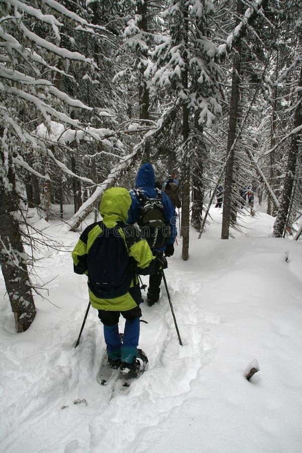 yelllow snowshoe parka hikers стоковые фотографии rf