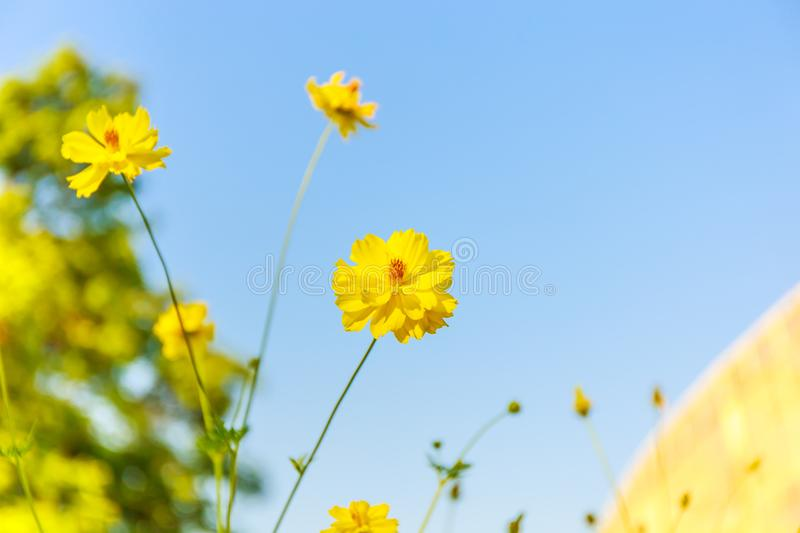 This is yello flower group stock image