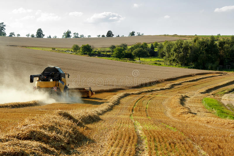 Download Yellov Combine On Field Harvesting Gold Wheat Stock Photo - Image: 29046688