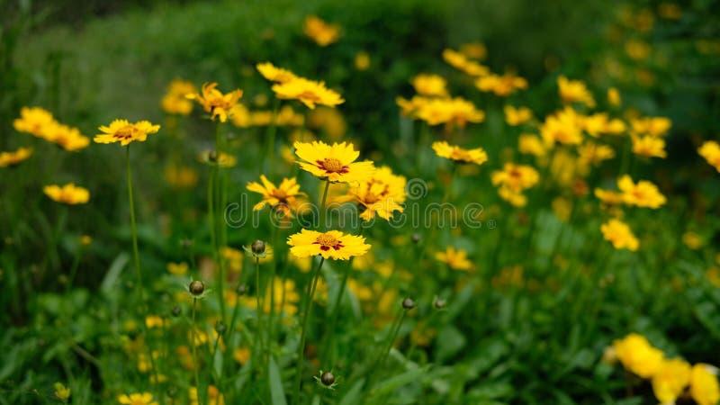 yellow fotografia stock libera da diritti