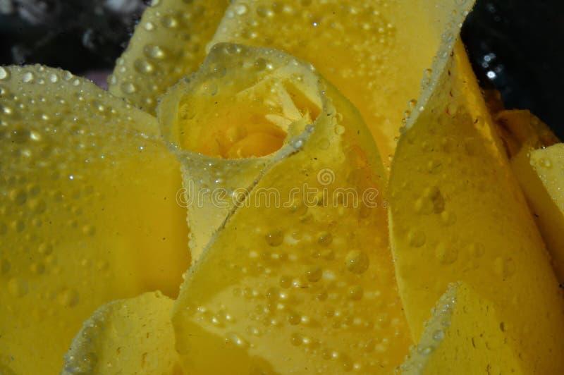 yellow royaltyfri fotografi