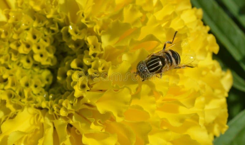yellow immagini stock libere da diritti