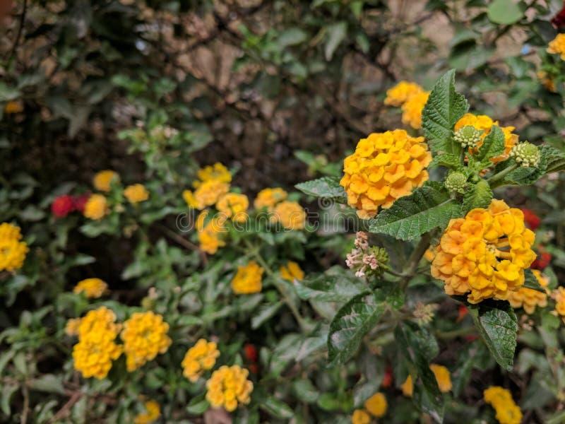 yellow obrazy royalty free