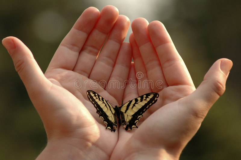 Yellow. An Eastern tiger swallowtail butterfly on two outstretched hands royalty free stock photo