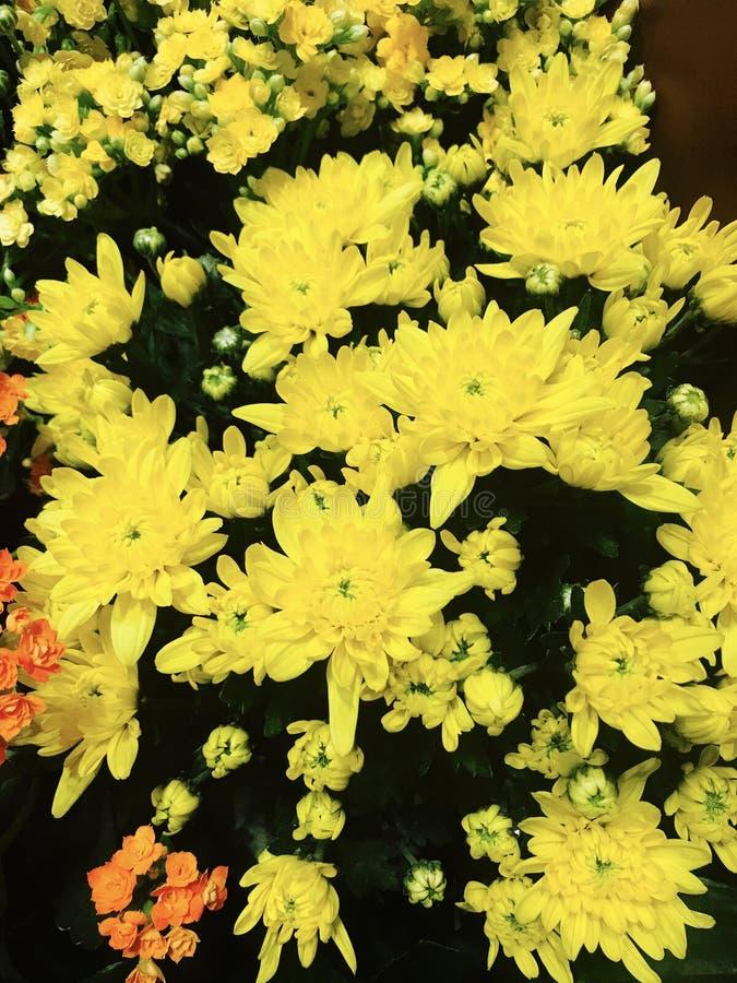 yellow fotografie stock libere da diritti