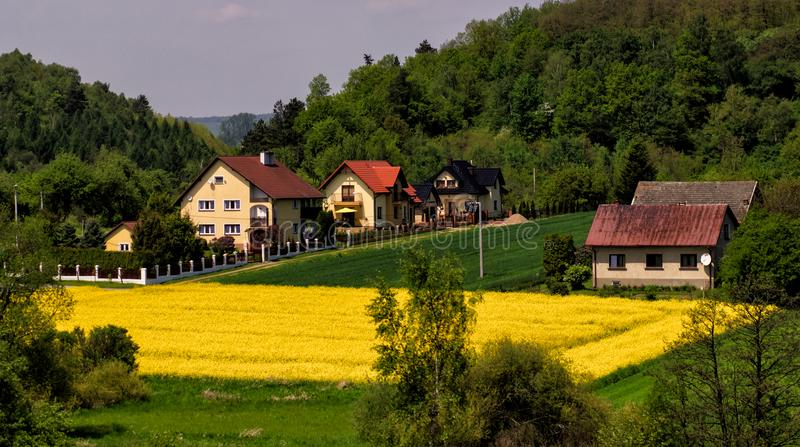 Yellow agriculture field village panorama landscape.  royalty free stock image