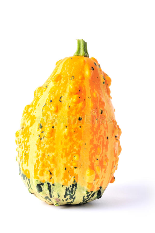 Free Yellow And Green Coarse Gourds Stock Photography - 16305572