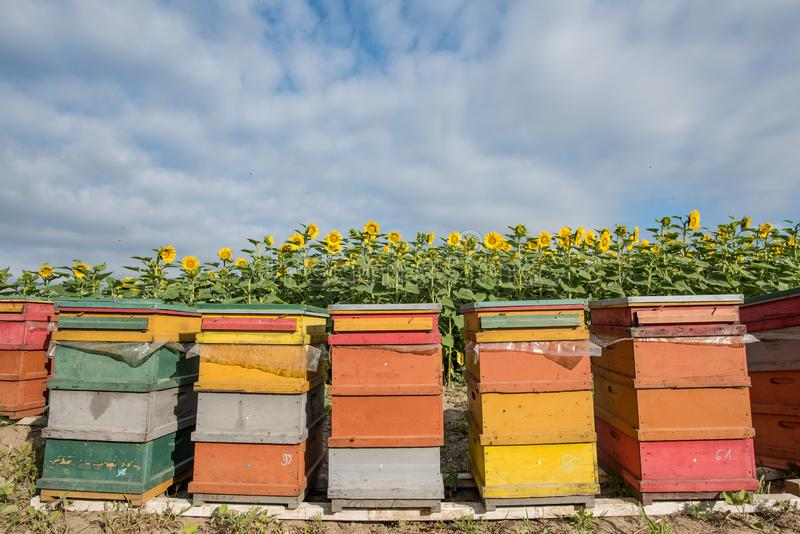 Yellow, Apiary, Beehive, Outdoor Structure stock photo