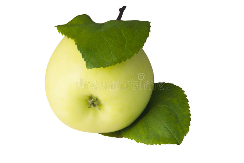 Yellow apple with leaves isolated on white. stock images