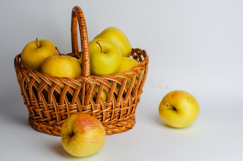 Yellow apples in a basket on white background. Gardening and harvest time royalty free stock image