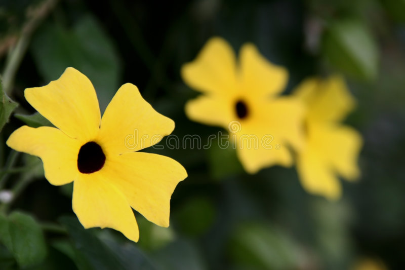 Yellow array of flowers royalty free stock photography