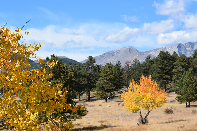 Yellow Aspens in Rocky Mountain National Park royalty free stock photo
