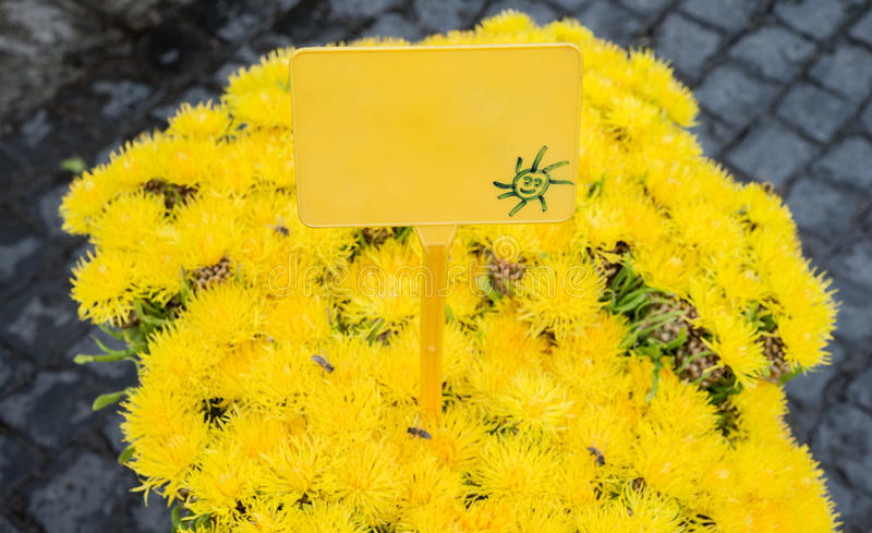 Yellow Aster Flower Bouquet Empty Market Sign Stock Image
