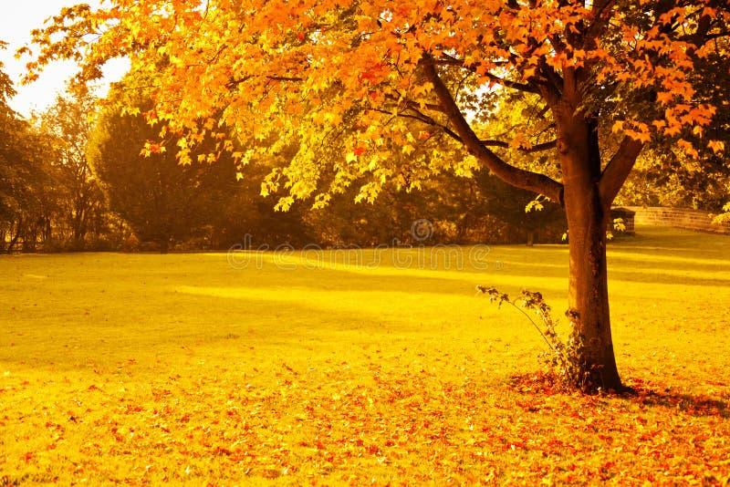 yellow autumn stock photo