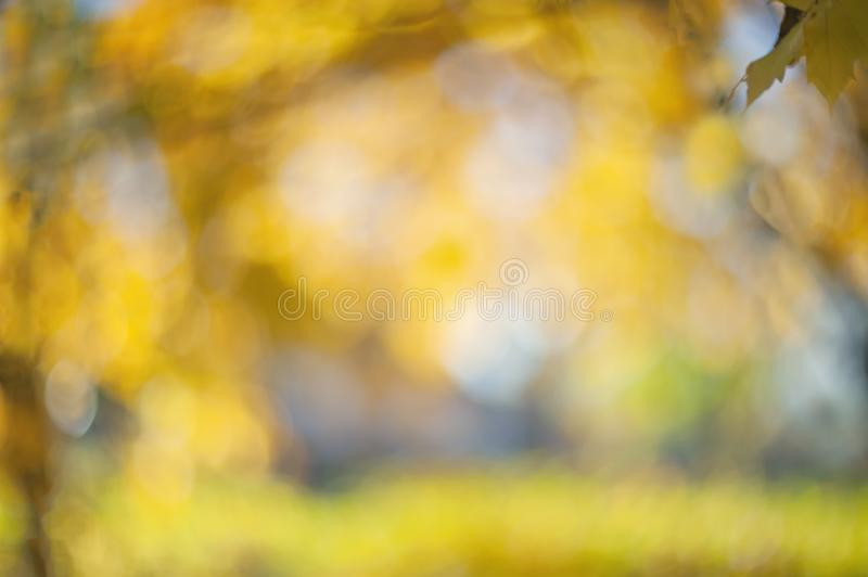 Yellow autumn colors of foliage. Branch with yellow leaves on a blurred background. Copy space. Background. Blur. Noise stock images