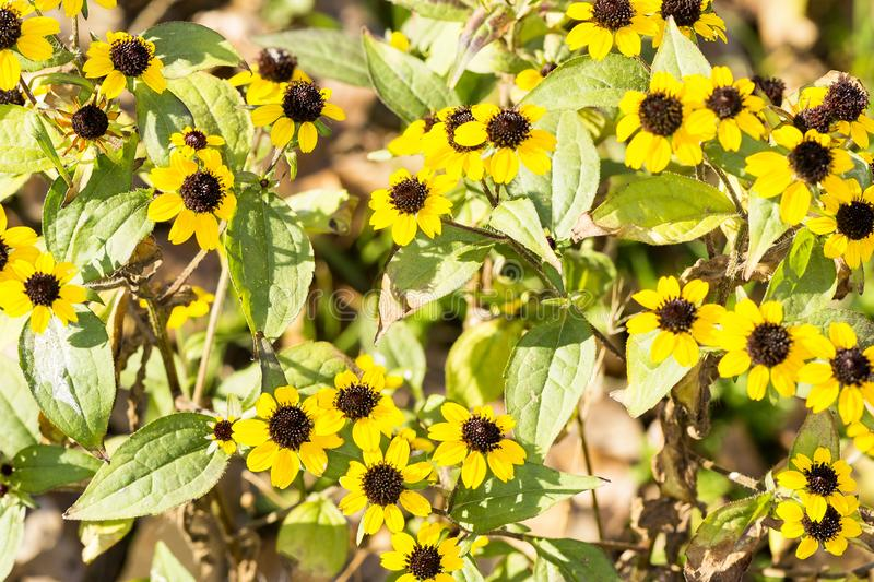 Yellow autumn flowers and bright sun stock photography