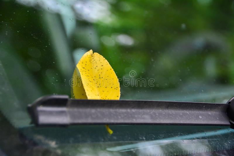 Yellow autumn leaf on a car. Yellow fallen leaf on a car glass as a symbol of autumn royalty free stock photo
