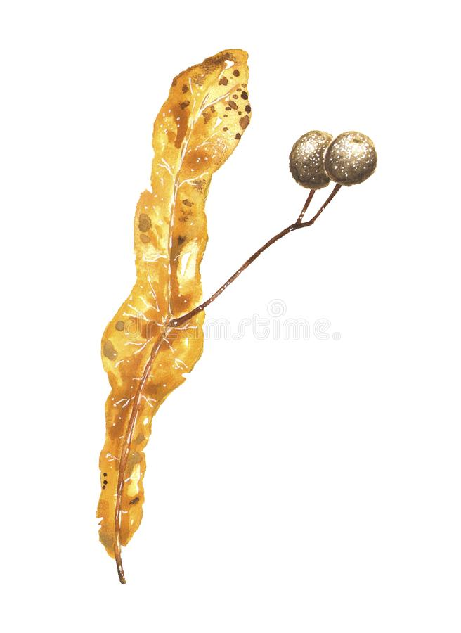 Yellow autumn leaf with seeds on branch watercolor stock photography