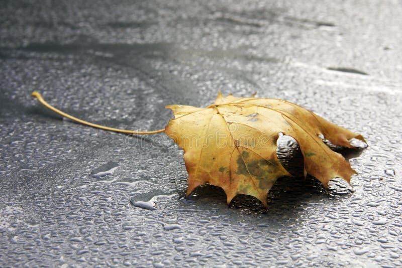 Yellow autumn leaf on spectacular rain drops. Yellow autumn leaf on a black and white surface with spectacular rain drops stock photography