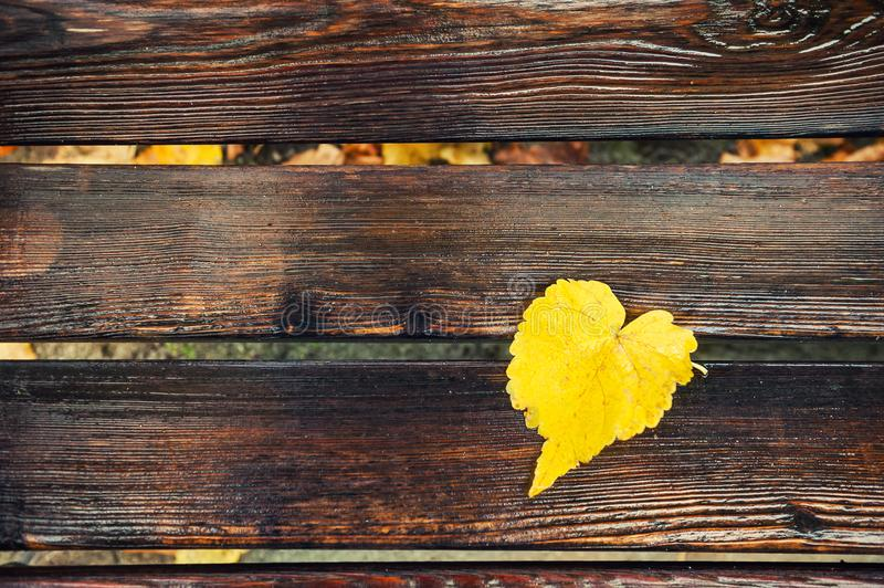 Yellow autumn leaf on the wet wooden bench stock images