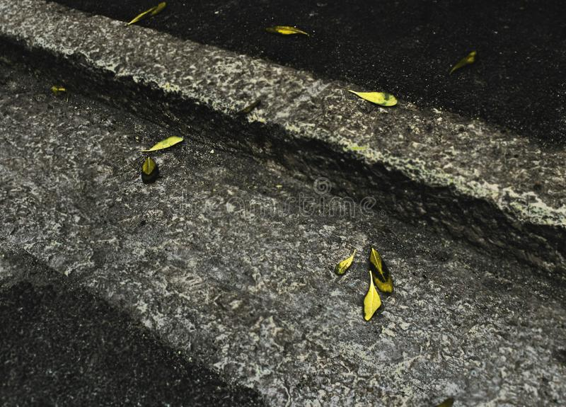 Yellow autumn leaves on gray concrete sidewalk pavement royalty free stock photography