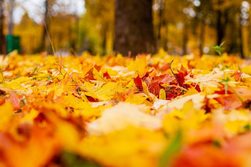 Yellow autumn leaves on the ground. Red and orange autumn leaves background royalty free stock images
