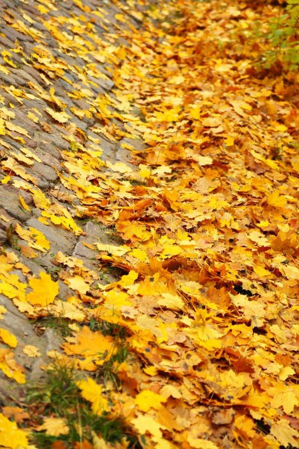 Yellow Autumn Maple Leaf Alley Stock Photos