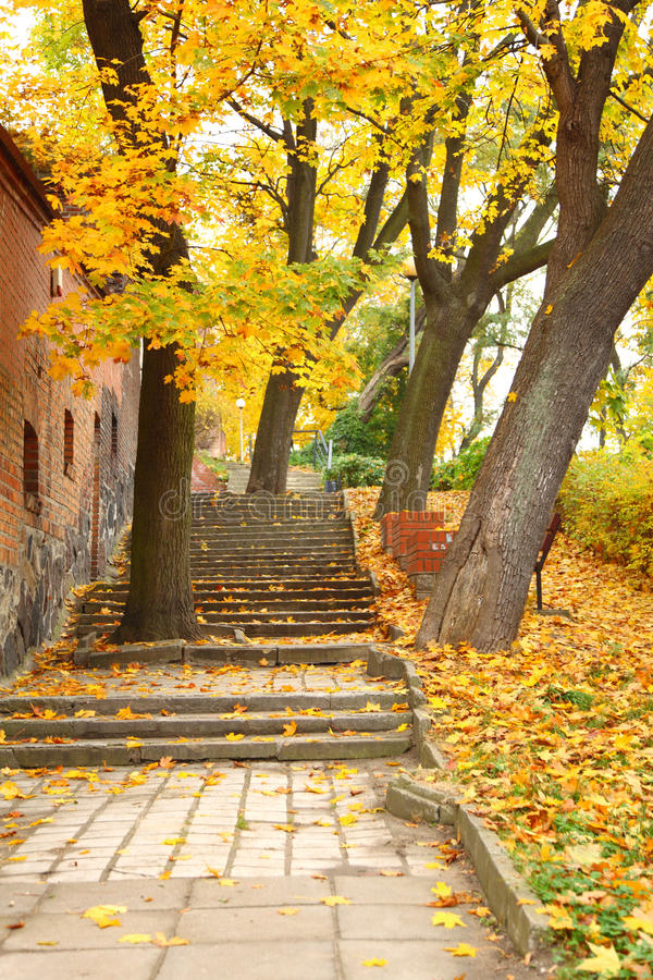 Yellow Autumn Maple Leaf Alley Stock Image