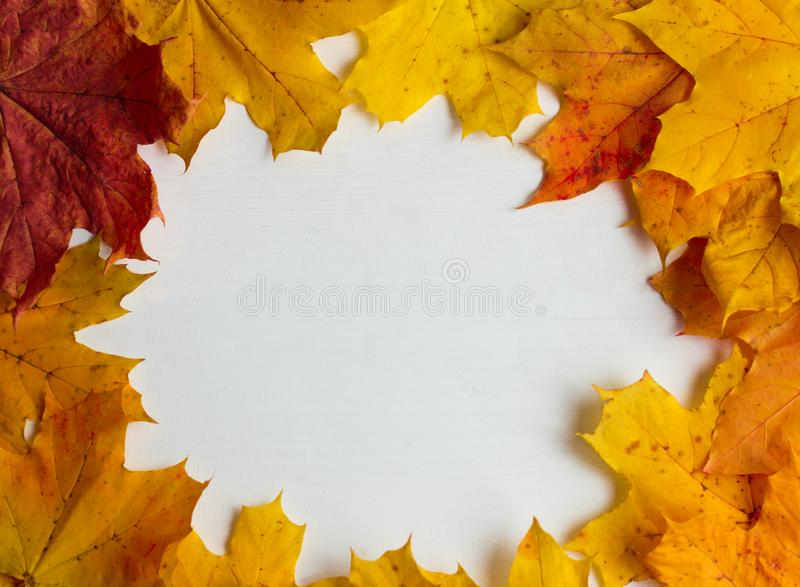 Yellow autumn maple leaves on white wooden background, with copy space stock image