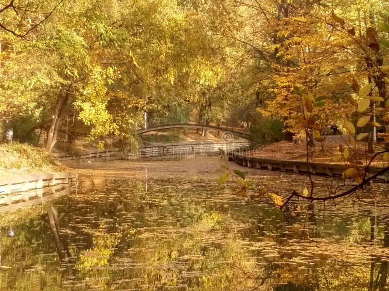 Yellow autumn painting-like park lake landscape with strong water reflection and a bridge in the background, branches framing stock photo