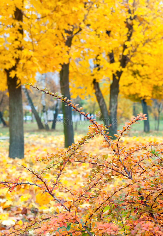 Download Yellow Autumn Park Royalty Free Stock Photography - Image: 14258847