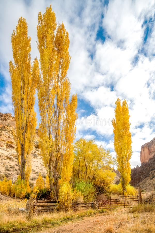 Yellow autumn poplar trees and a rustic cabin in Oregon. Fall colors against a blue cloudy sky in the autumn stock photo