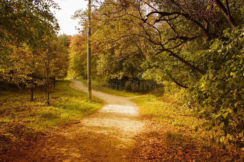 Yellow autumn royalty free stock images