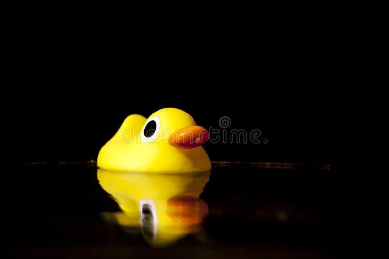 Yellow baby duck garden water stock images