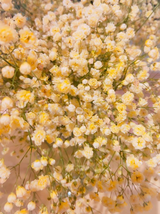 Background of yellow flower in summer royalty free stock photo