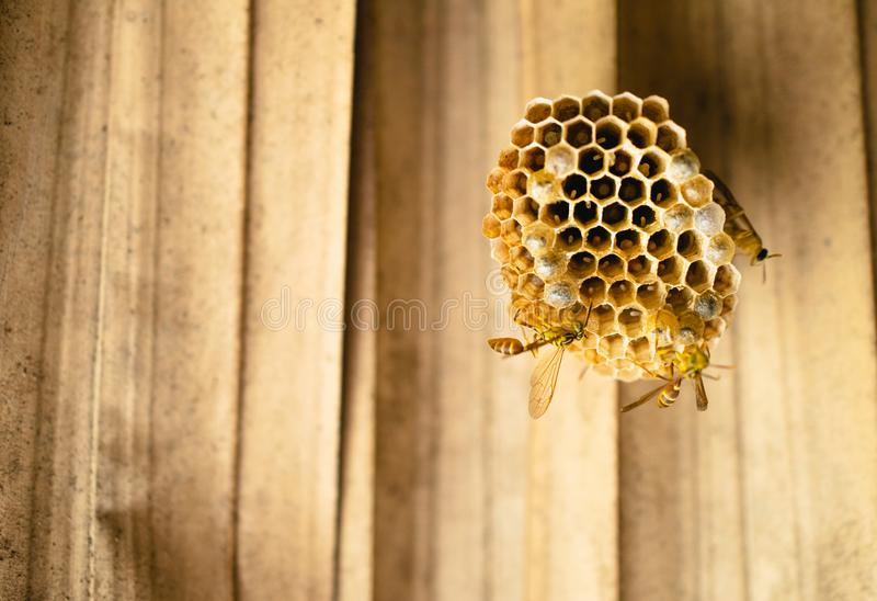 Bees, wasps build a nest together, filled with eggs royalty free stock image
