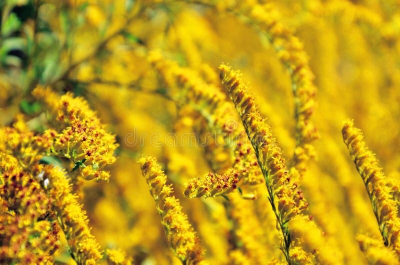 Yellow background stock image