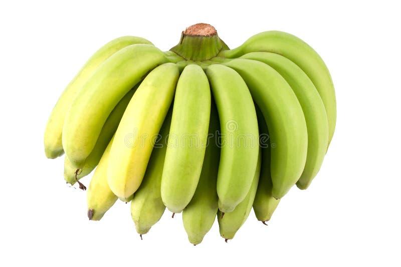 Yellow Banana Comp. Yellow Green Banana Comp isolated on white background stock image