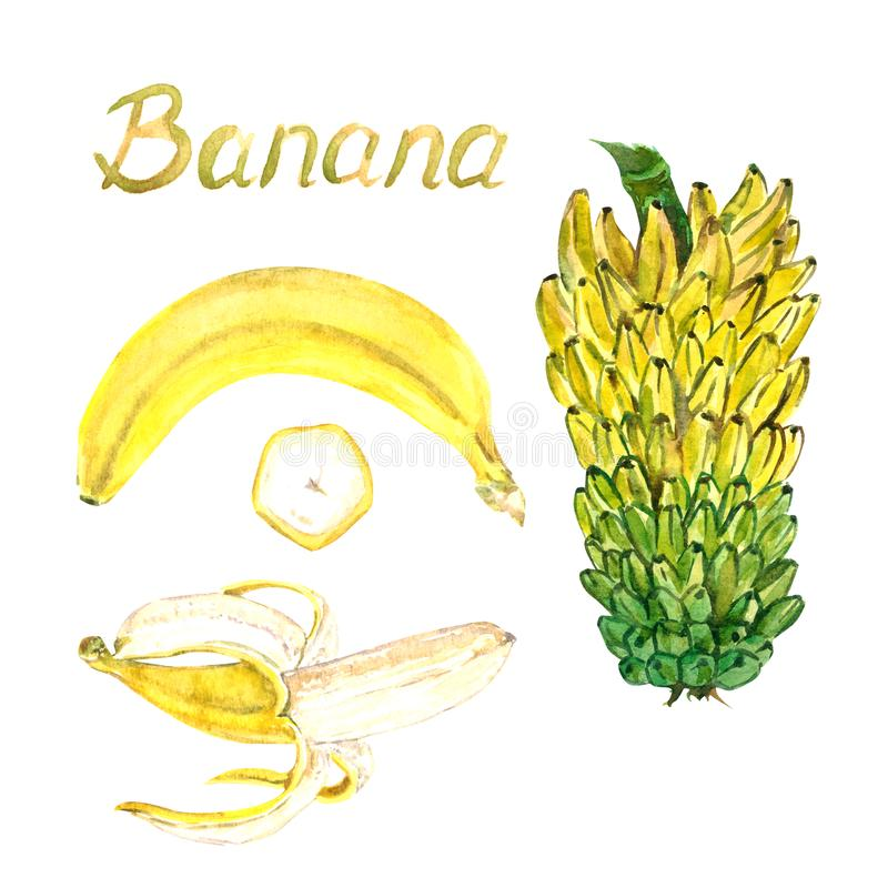 Yellow bananas open, closed and cut slice and tier. Hand painted watercolor illustration with inscription isolated on white background stock illustration