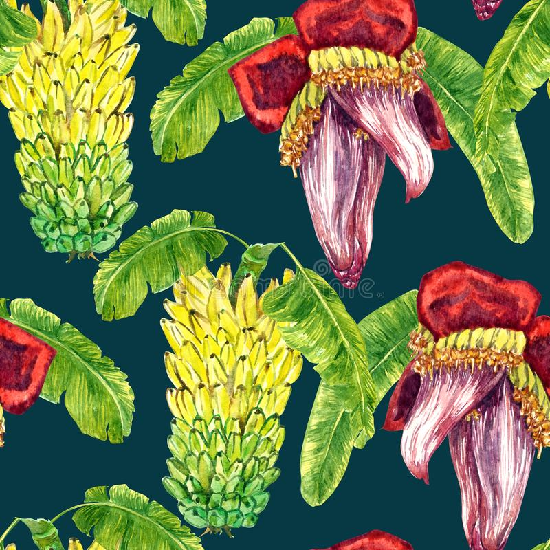 Yellow bananas tier bunch and flower banana heart with leaves. Seamless pattern design, hand painted watercolor illustration, dark green background vector illustration