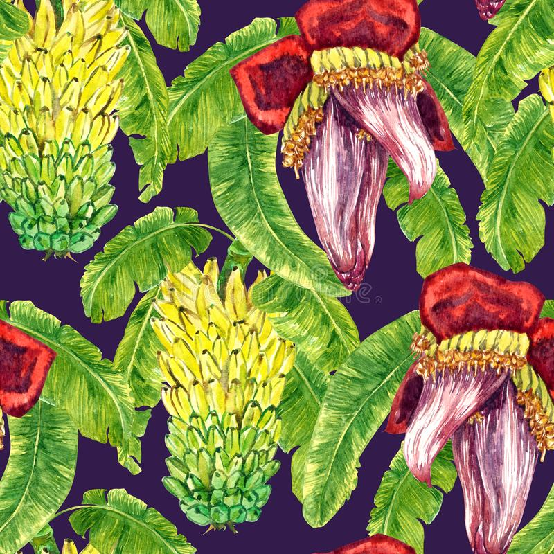 Yellow bananas tier bunch and flower banana heart with leaves. Seamless pattern design, hand painted watercolor illustration, dark blue background vector illustration