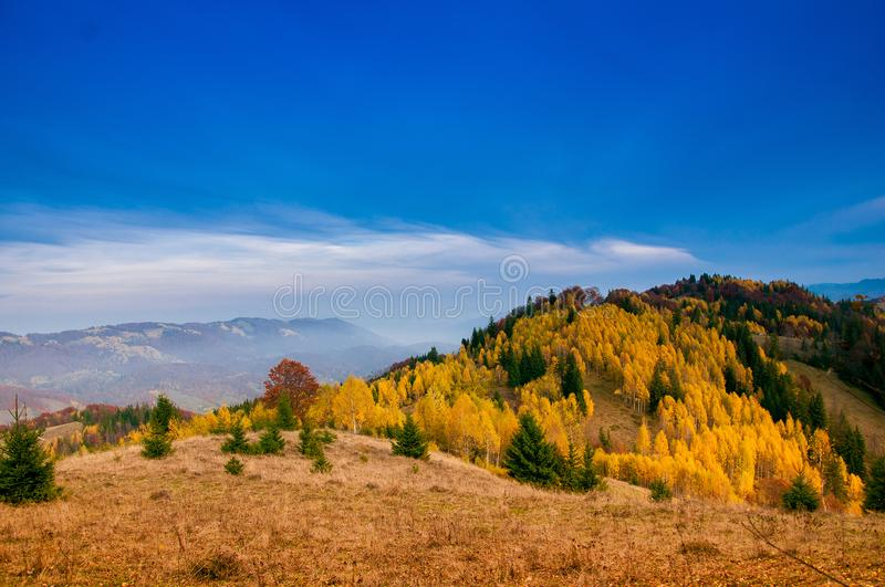 Yellow Beautiful Trees. Autumn Yellow and Beautiful Trees royalty free stock photo