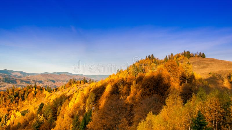 Yellow Beautiful Trees. Autumn Yellow and Beautiful Trees royalty free stock photos