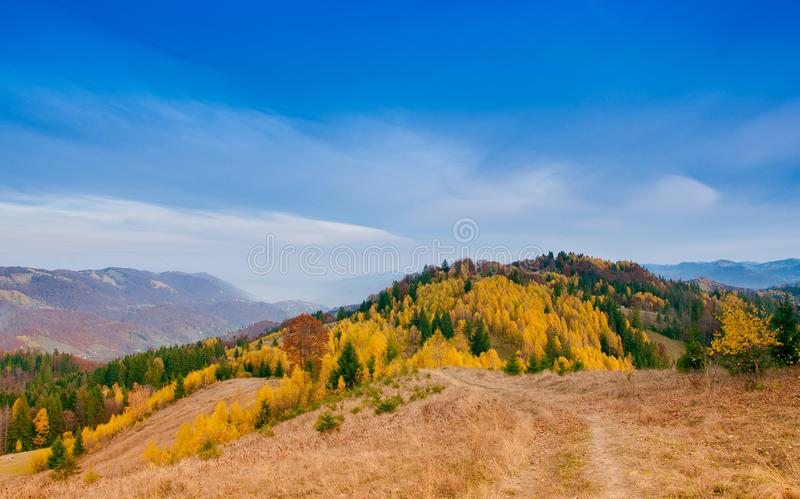 Yellow Beautiful Trees. Autumn Yellow and Beautiful Trees stock image