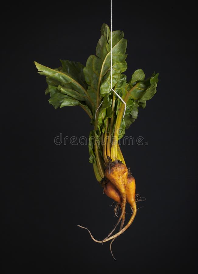 3 hanging beets on black background stock images